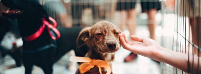 Animal Shelter Hires Much Needed Vet